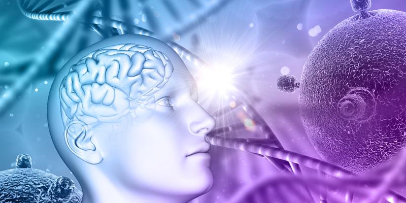 بهبود عملکرد مغز با پیاده روی