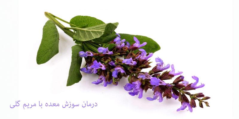 درمان سوزش معده با گیاه مریم گلی