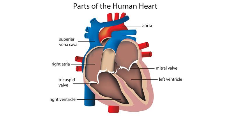 جلوگیری از حمله قلبی