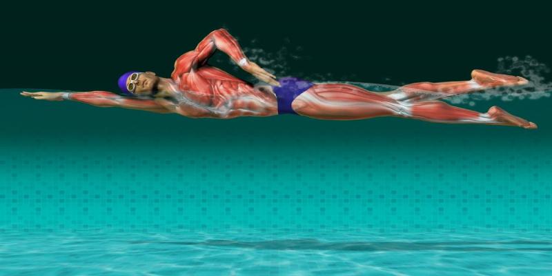 ماهیچه های درگیر در شنا