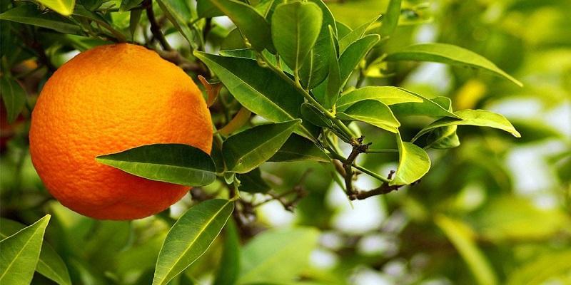 با-فارنژیت-یا-التهاب-گلو-آشنا-شوید-نارنج